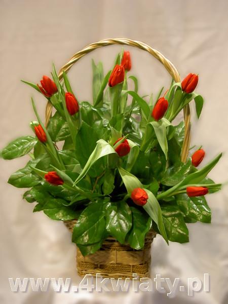 Koszyk z tulipanami, tulipany w koszu. Kosze z dostawą.