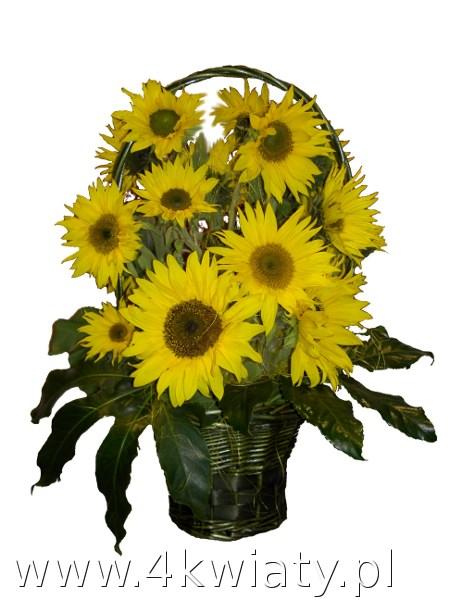 Kosz słoneczników, kosze z kwiatami dostawa w Warszawie i Nieporęcie