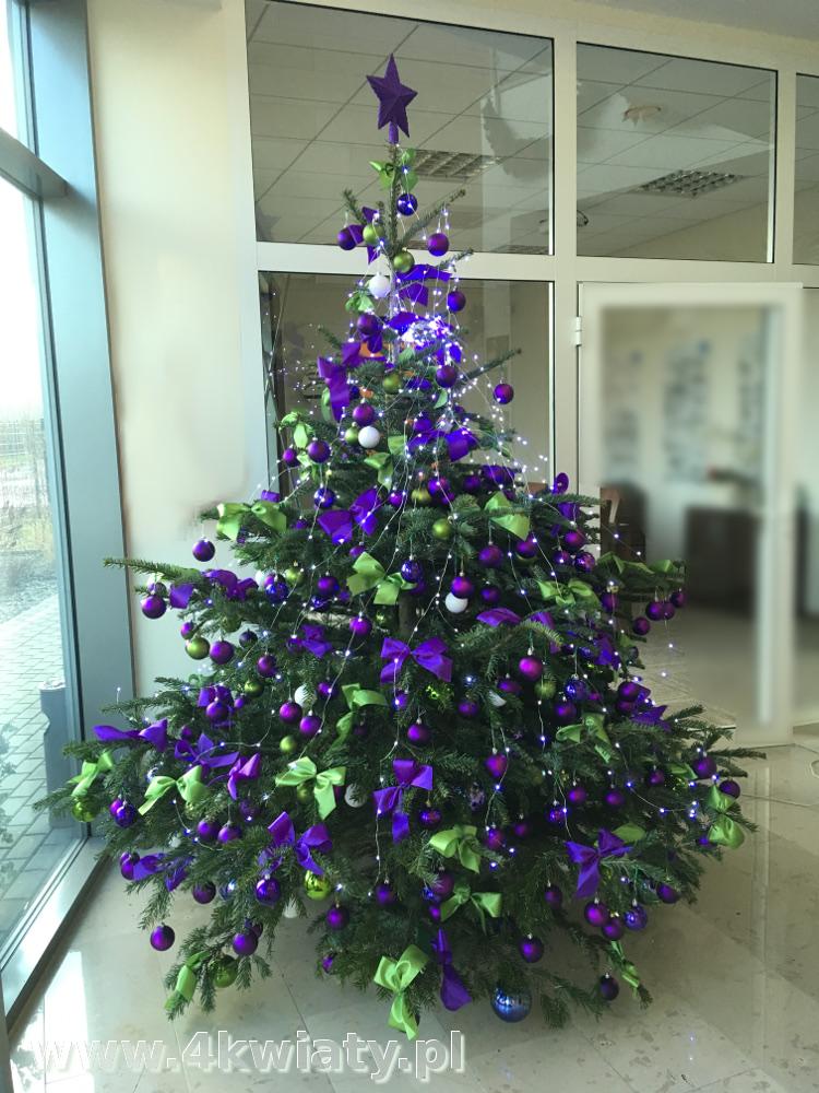 Choinka żywa jodła kaukaska ubrana dekoracjami z dostawą Warszawa do firmy biura dekoracje fioletowe i zielone