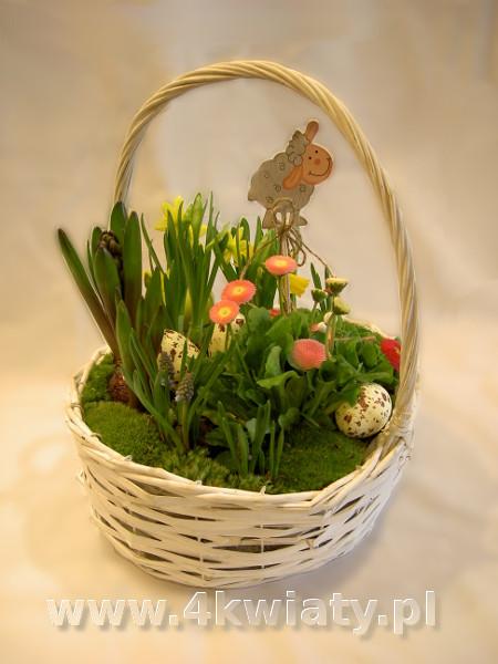 Wielkanocny ogródek, stroik na Wielkanoc z mchem, cebulowe, hiacynty, stokrotki, narcyzy, baranek w koszyku.