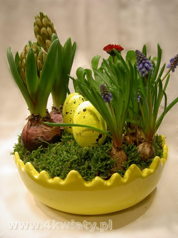 Stroik wielkanocny w jaju, kwiaty cebulowe hiacynty, szafirki, stokrotki, mech. Dekoracja stołu na Wielkanoc