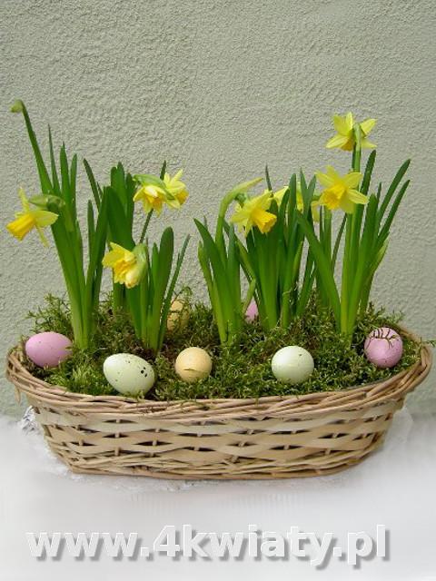 Koszyk z narcyzami stroik wielkanocny, jajka pisanki, dekoracja wielkanocna z dostawą Warszawa nasadzenie z roślin cebulowych
